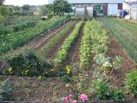 France. (Vegetables Fruit and flowers.)