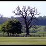 Trees (Crataegus laevigata (Midland hawthorn)?)