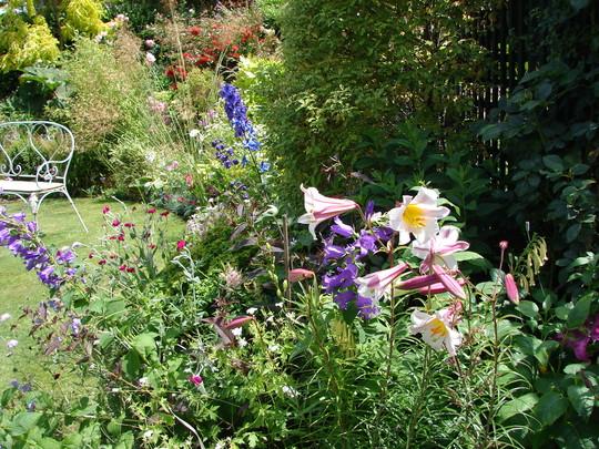 Lillies (Lilium regale (Regal lily))