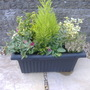 Autumn planter