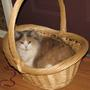 Chenille in a basket