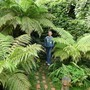 Harry and the Tree Ferns (Dicksonia antarctica (Soft tree fern))