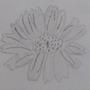 Pencil drawing by Jade