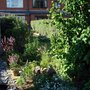 back garden (Corylus avellana (Corkscrew hazel))