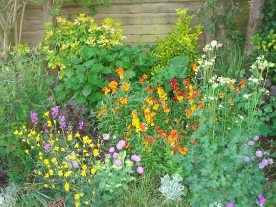 Right border - Spring 2007 (Cheriranthus cheri)