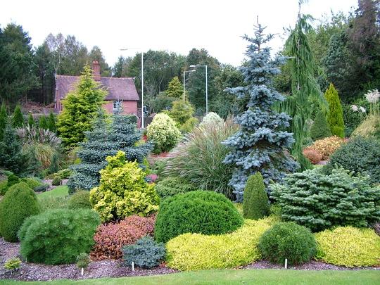 Mltiples combinaciones de plantas mostrad las vuestras for Arbustos decorativos jardin