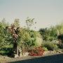 Flower border France (Roses)