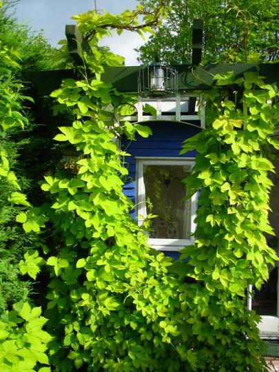 My Summer House.....