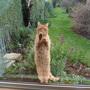 Let me in!!!