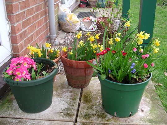 Mum's pots of flowers.