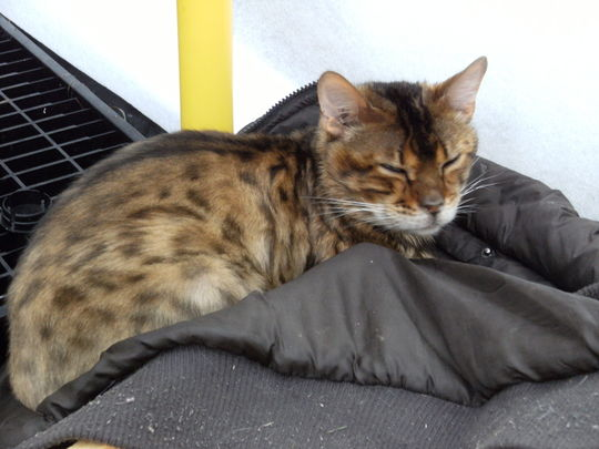 Puss Dozing in Greenhouse