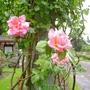 Rosesgarden1
