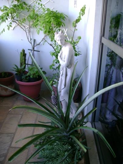 Bromeliad  (Bromeliad)