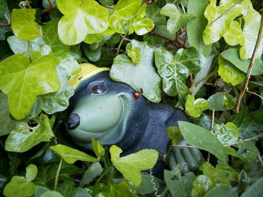 Mole & Ladybird