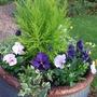 Large blue pot re-planted.
