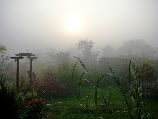 Misty October morning in Hungary no 5