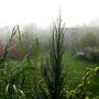Misty October morning in Hungary no 6