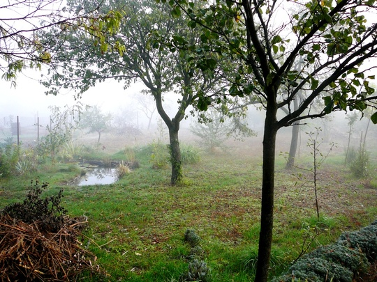 Misty October morning in Hungary no 9