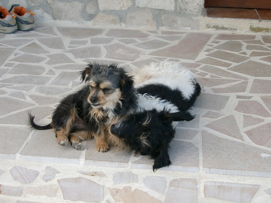 Finn and Toto