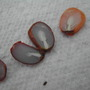Persimmon fruit seeds cut in half,check out blog for details