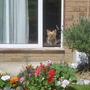 Ella looking at the garden