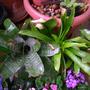 Bromeliad1