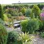 The pond garden, Autumn 07