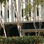 Strelizia reginae/Eucalyptus citriodora - Bird of Paradise/Lemon Gum (Corymbia citriodora)
