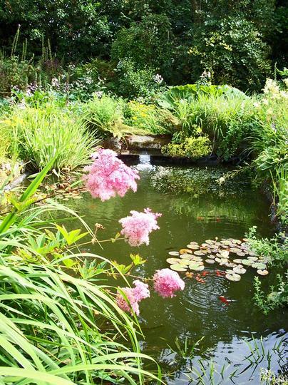 The pond at Moyclare Garden, Liskeard, Cornwall