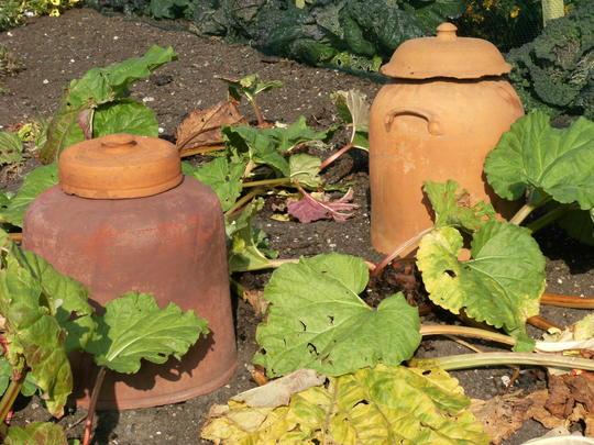 Old Rhubarb pots