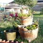 Fountain_turned_container_garden
