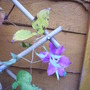 one_lone_clematis.jpg