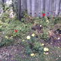 2008-10-14_001_discarded_annuals.jpg