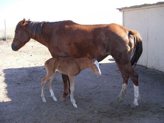 BABY RICOCHET AND MAMMA APRIL