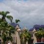 Brahea edulis - Guadalupe Palm (Brahea edulis - Guadalupe Palm)