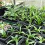 Gardening_blog