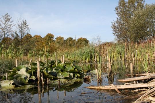 Wildlife Pond (1)