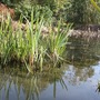 Wildlife Pond (2)