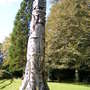 REDWOOD TOTEM AT MONTACUTE