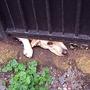Dog under gate in France.