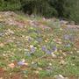 Wild Irises January 2007
