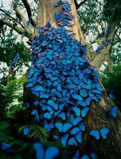 BEAUTIFUL BLUE BUTTERFLIES