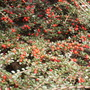 Oct_garden_2008_145