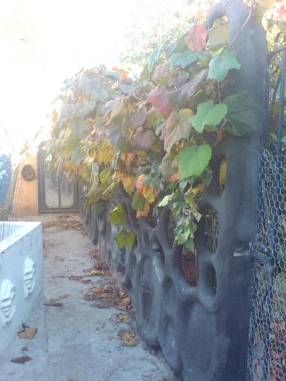 my concrete wall