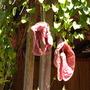 Quail_botanical_garden_pics_121