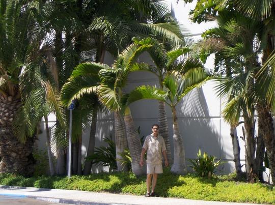 Hyophorbe langencaulis - Bottle Palm (Hyophorbe langencaulis - Bottle Palm)