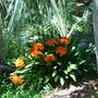 Plants_053