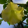 THE FLOWER IS HUGE,