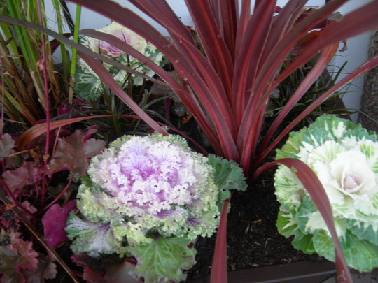 Cabbage Palm and Cabbages.