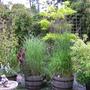 Grasses in barrels